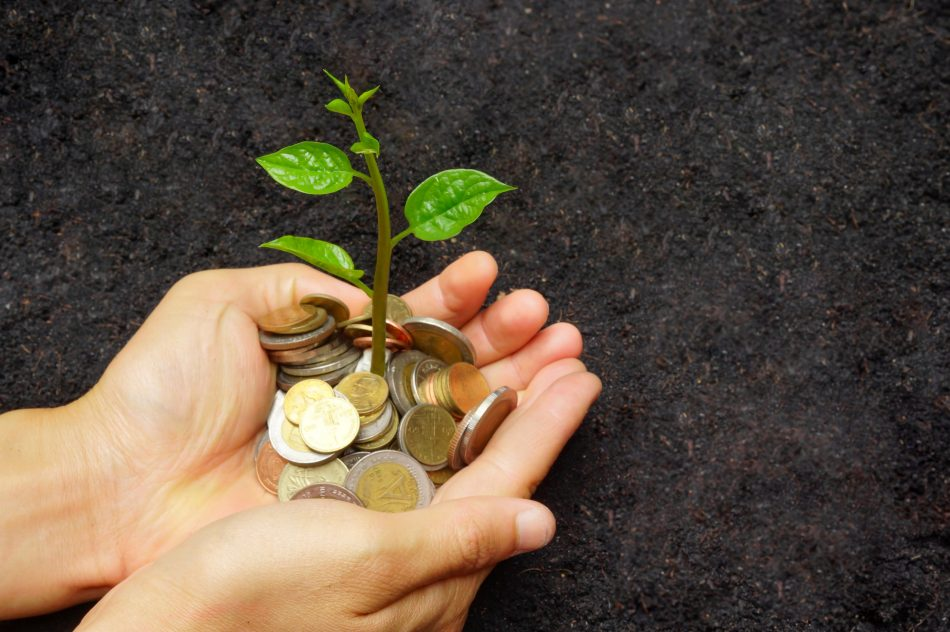 Hand holding a young green plant growing on a pile of golden coins / Business with csr practice and environmental concern